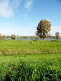 View in the Netherlands at river the maas Royalty Free Stock Image