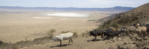 View on the Ngorongoro Crater Stock Photos
