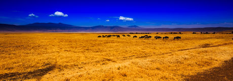 View of Ngorongoro crater Stock Image
