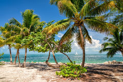View of nice tropical background with coconut palms. royalty free stock photography