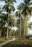 View of nice tropical background with coconut palms. Pulau Sibu, Malaysia. View of nice tropical background with coconut palms with a grass way on Pulau Sibu stock image