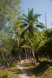 View of nice tropical background with coconut palms. Pulau Sibu, Malaysia. View of nice tropical background with coconut palms with a grass way on Pulau Sibu Stock Photo