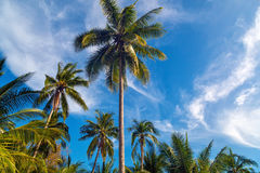 View of nice tropical background with coconut palms. Thailand. H. View of nice tropical background with coconut palms. Thailand . Holiday and Vacation concept Royalty Free Stock Photo
