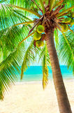 View of nice tropical beach with some palms around Stock Images