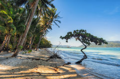 View of nice tropical beach with some palms around. Koh Laoya Sea of Thailand. Tropical island of Koh Laoya in the Gulf of Thailand royalty free stock images