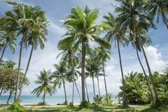 Tropic Stock Images