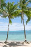 Tropic palms. View of nice tropical beach with some palms royalty free stock images