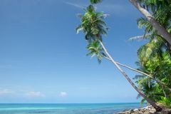 Tropic view Royalty Free Stock Photos