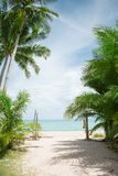 Tropical beach with some palms. View of nice tropical beach with some palms royalty free stock photo