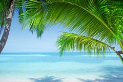 View of nice tropical beach with some palms Stock Photos