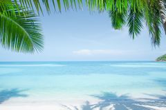 View of nice tropical beach with some palms Royalty Free Stock Images