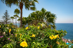 View of nice tropical shore with palms around. Royalty Free Stock Images