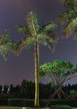 View of night palm tree Stock Image