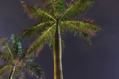 View of night palm tree Royalty Free Stock Images
