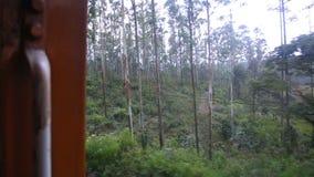 The view of Nuwara Eliya landscape from a moving train, Sri Lanka stock footage
