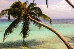San Blas beach palm tree Royalty Free Stock Photos