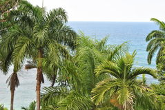 View of the ocean. The caribbean ocean behind some palm trees royalty free stock photo