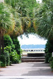 View of ocean through palm trees in Charleston, South Carolina. Royalty Free Stock Photos
