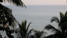 View of ocean waves through palm trees. A view of ocean waves through palm trees stock footage