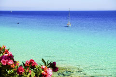View on the ocean, white boat and pink tropical flowers on the C Royalty Free Stock Images