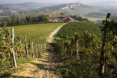 View Of A Farm In The Vineyards Royalty Free Stock Images
