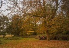 Free View Of A Woodland Walk With A Gate In The Distance. Royalty Free Stock Photo - 127967635