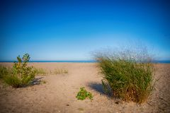 View Of Sand Dunes At Rondeau Provincial Park Beach In The Summer, With Lake Erie In The Background. Royalty Free Stock Image