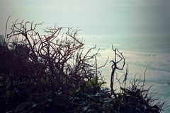 Free View Of Sea Branches, Overlooking Foggy Pacific Ocean View Royalty Free Stock Images - 105599639
