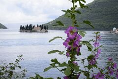 Free View Of The Island Of Saint George With A Pink Flowering Plant In Front, From Perast, Located In The Bay Of Kotor In The Adriatio Stock Photo - 182477360