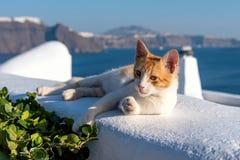 Oia village - Aegean sea - Santorini cat - Greece. View of Oia village - Aegean sea - Santorini cat - Greece royalty free stock images