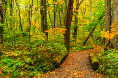 View of Oirase Stream Walking Trail in colorful foliage of autumn season forest