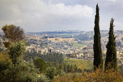 View of the old city of Jerusalem, Israel. View of the old city of Jerusalem with cyprus trees in the forground, Israel royalty free stock photo