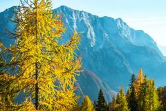 View from the old military road headed to Mangart saddle high in Julian alps. On a sunny beautiful autumn day with colorful scenery and trees royalty free stock photos