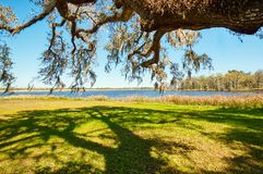A view from an old plantation overlooking a river taken from under a live oak tree. A view from an old plantation overlooking a river.  This was taken from stock images