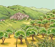 View of an olive grove in the hinterland of Liguria. With village perched on the hill Stock Photo