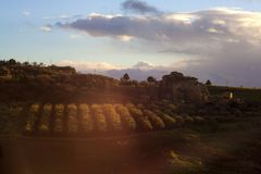 View of olive grove at sunset in Leonforte Royalty Free Stock Images