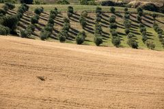 View of olive groves and fields on rolling hills of Abruzzo. Italy stock photo