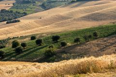 View of olive groves and fields on rolling hills of Abruzzo. Italy royalty free stock images