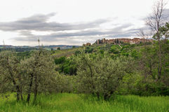 View of olive trees and hills with villa at the top in the Tuscan countryside. Stock Images