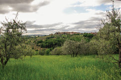 View of olive trees and hills with villa at the top in the Tuscan countryside. Stock Photos