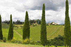View On A Vineyard Stock Images