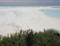 View onto the Dead sea and Rosemary shrubs Stock Image