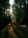 Dark Forest Road with Light Beams Stock Photos