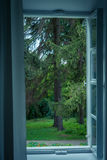 View from the opened window to the green garden with green trees. View from the opened window to the green garden forest with coniferous trees and lawn Royalty Free Stock Photos