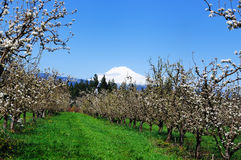 A view of orchards in Hood river Stock Photo