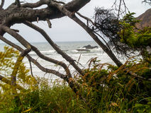 View of the Oregon Coast through the Trees Royalty Free Stock Photos