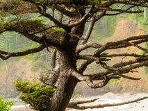 View of the Oregon Coast through the Trees Stock Photography
