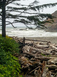 View of the Oregon Coast through the Trees Stock Image