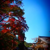 View Of Osaka. From my point of view, taken in one of the temple of Osaka. Lovely leaves and trees, simple and calming while looking at the cool blue sky Stock Photos