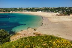 Ouaisne Bay at Low Tide. A view of Ouaisne Bay, Jersey, UK, at low tide on a sunny day. The village of St. Brelade in the background and small yellow flowers in Royalty Free Stock Photo